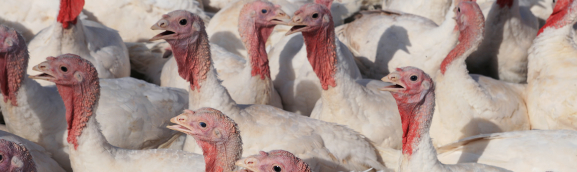 Poultry autogenous bacterins and specimen testing
