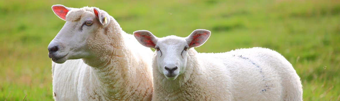 Ovine and Caprine Autogenous Bacterins and Specimen Testing